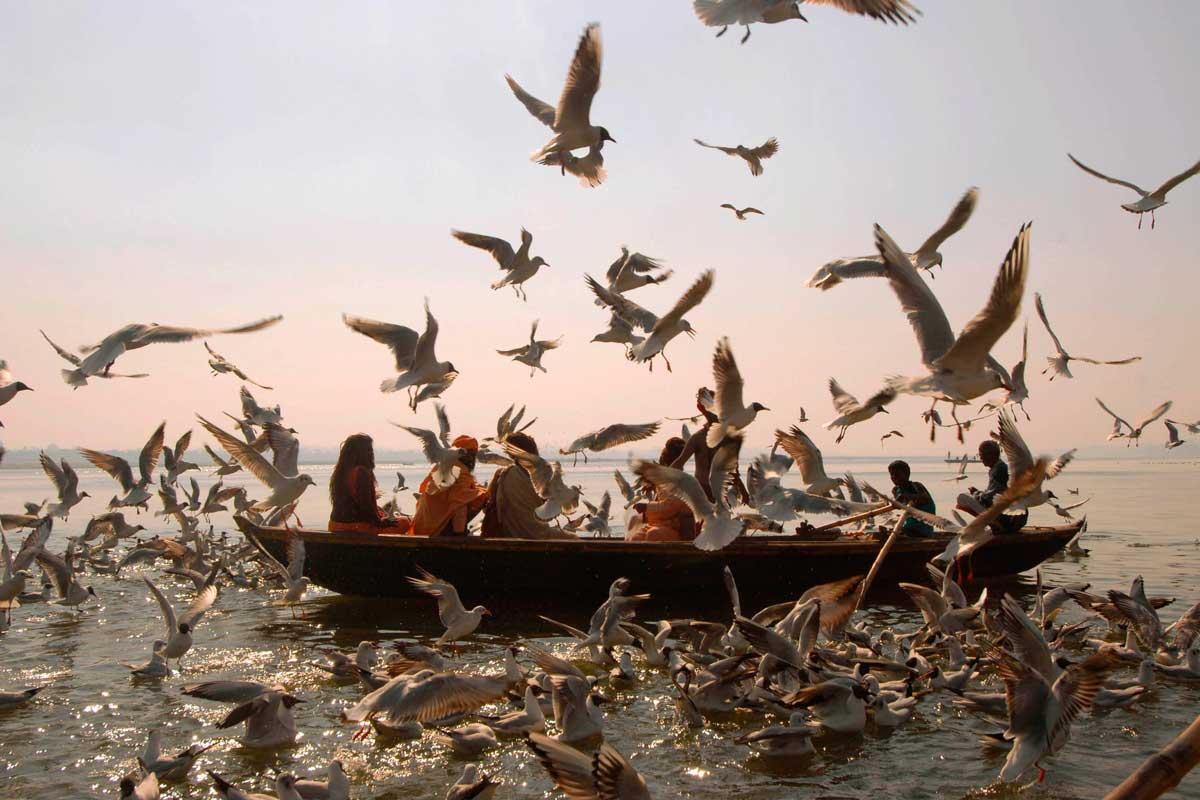 Boat-Birds